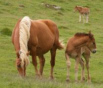 Les chevaux sont en liberté (2009)