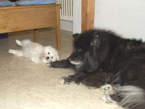 Der Wolllieferant Koyuk beim Babysitten