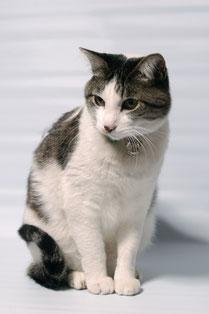 1、ご予約について(挨拶する猫)
