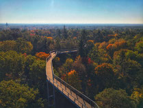 Hoch oben in den Baumkronen des Herbstes