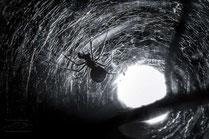 Macro photo d'Araignée au coeur de sa toile en contre-jour par Guilhem MANZANO Photographe de nature