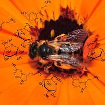 Pflanzen und Tiere bestehen aus organischen Stoffen.