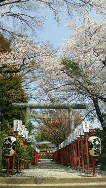 vwkaz69さん:水戸八幡宮の桜