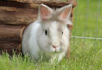 Wissenswertes über Kaninchen