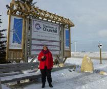 bei den Eisbären in Canada