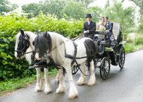 Hochzeitskutsche in Mecklenburg-Vorpommern; Kutschfahrten in MV; Hochzeitskutsche in Rostock