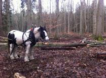 Holz rücken mit Pferden; Hochzeitskutsche in Rostock; Kutsche in MV