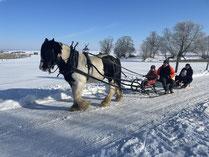 Holzrücken mit Pferden; Hochzeitskutsche in Rostock; Kutsche in MV