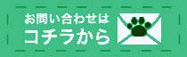 お問合わせはこちら。子猫の激安販売【関東・埼玉 猫の部屋セイワ】ブリーダーから直接お迎えで、安心・安い!