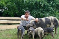 Freilandschweine am Bauernhof