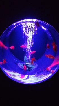 幻想的な金魚。