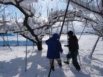 枝を支柱で補強する