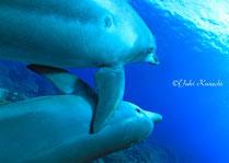 ドルフィン水腕観察できるイルカの行動と意味