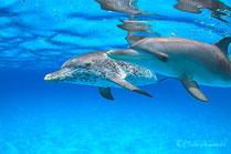 バハマドルフィンスイムクルーズ中遊びに来たイルカ