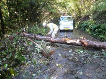 東部地区倒木処理