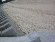 垂直護岸が障害物となり右往左往するアカウミガメの足跡(沖縄島)