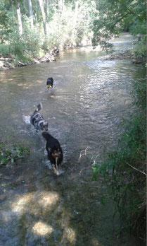 Abkühlung im nahegelegenen Fluß