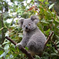 Australia June_17