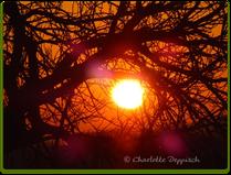 Charlotte Deppisch: Foto Sonnenuntergang