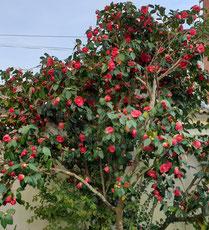 jardin de notre maison d'hôtes à La Réole