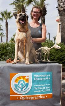 Hier stellen wir die Chiropraxis vor und auch die Box , die für die chiropraxis so wichtig ist