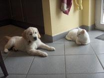 Syra 9 Wochen und Lilli 3 Jahre