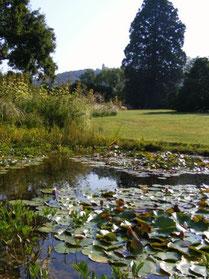Gartenteich im Weinheimer Hermannshof im Spätsommer