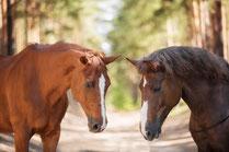 Конные прогулки, уроки верховой езды, сувенир, магнит