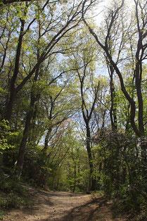 木立の散策(よっこ*さん撮影)
