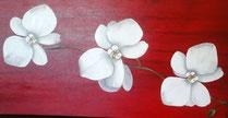 Blanches Orchidées