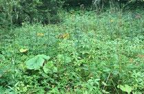 アヤメ平の草花