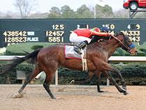 Looking at Lucky gewinnt die Rebel Stakes. www.bloodhorse.com