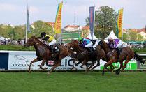 Renn-Pferde beim Flach-Rennen