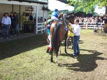 Pferd im Ab-Sattel-Ring