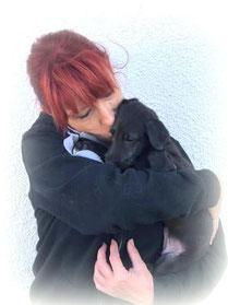 Scottish Deerhounds vom Züchter/Unsere Deerhound Welpen werden liebevoll in der Familie aufgezogen!/FCI Deerhound Zucht in Deutschland/Rheinland-Pfalz!