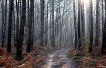 la forêt landaise autour de  Capbreton