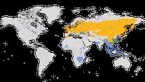 Karte zur Verbreitung der Gattung der Schwirle weltweit.