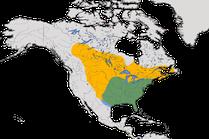 Karte zur Verbreitung der Purpurgrackel (Quiscalus quiscula) weltweit.