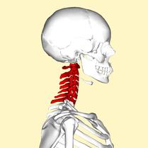 肩こり 五十肩 首 ストレートネック 頸椎症 むちうち