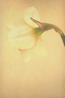 Narcisse poétique