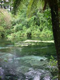 Hamarana Springs