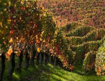 Prachtige herstkleuren tegen oogstseizoen