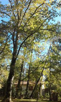 gîte niché dans le bois