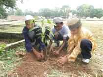 マンゴーの苗を丁寧に植樹