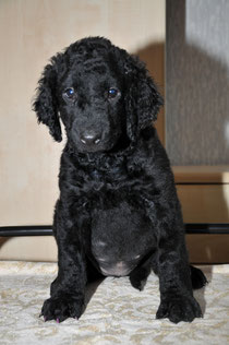 at the age of 7,5 weeks