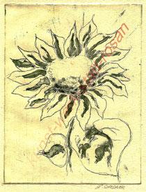 Blume der Sonne - Radierung-Aquatinta - Mehrplattendruck