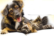 Echte Liebe gibt es nur unter Hunde und Katzen