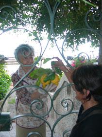 i limoni della costiera amalfitana