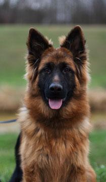 Barney ist ein fertig ausgebildeter Blindenhund, bin sehr Stolz auf dem BUB!