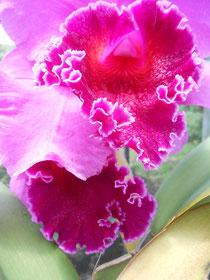 Am Straßenrand wachsen Orchideen als wären sie Unkraut